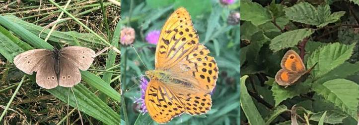 Lots more Butterflies found down at The Sign Makers wildlife ponds during the 2019 big butterfly count