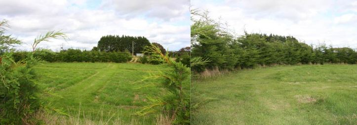 Photos of the circle within the bed of conifers at The Sign Maker. Ready to be cultivated into the wild garden.