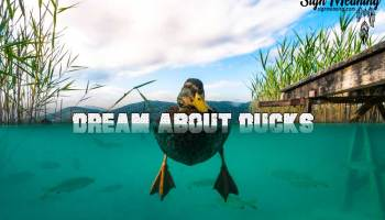 Interesting Meanings Behind Dreams about Turtles