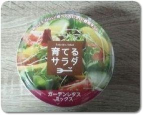 育てるサラダはファミマの栽培セット!育て方と食べ頃は?