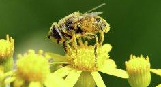 العلماء: انخفاض الحشرات يهدد الحياة على الأرض