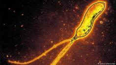 تجنب الفيروسات المعدية