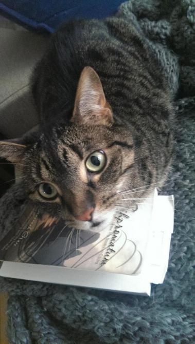 U.S.A. - Chicago, Illinois - Scarfy Cat