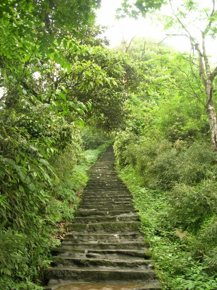 """""""The trees glistened from the morning showers."""" - Emei Shan"""