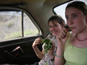 Fresh Wild Rhubarb