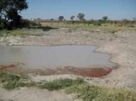 Signs of a recent kill. Botswana