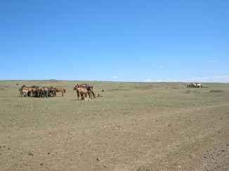 We occasionally saw herds of what we thought must be wild horses, given the absence of any farms, barns, or even fences.
