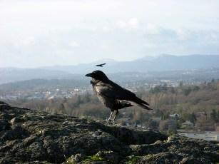Douglas Park Lookout Victoria, BC