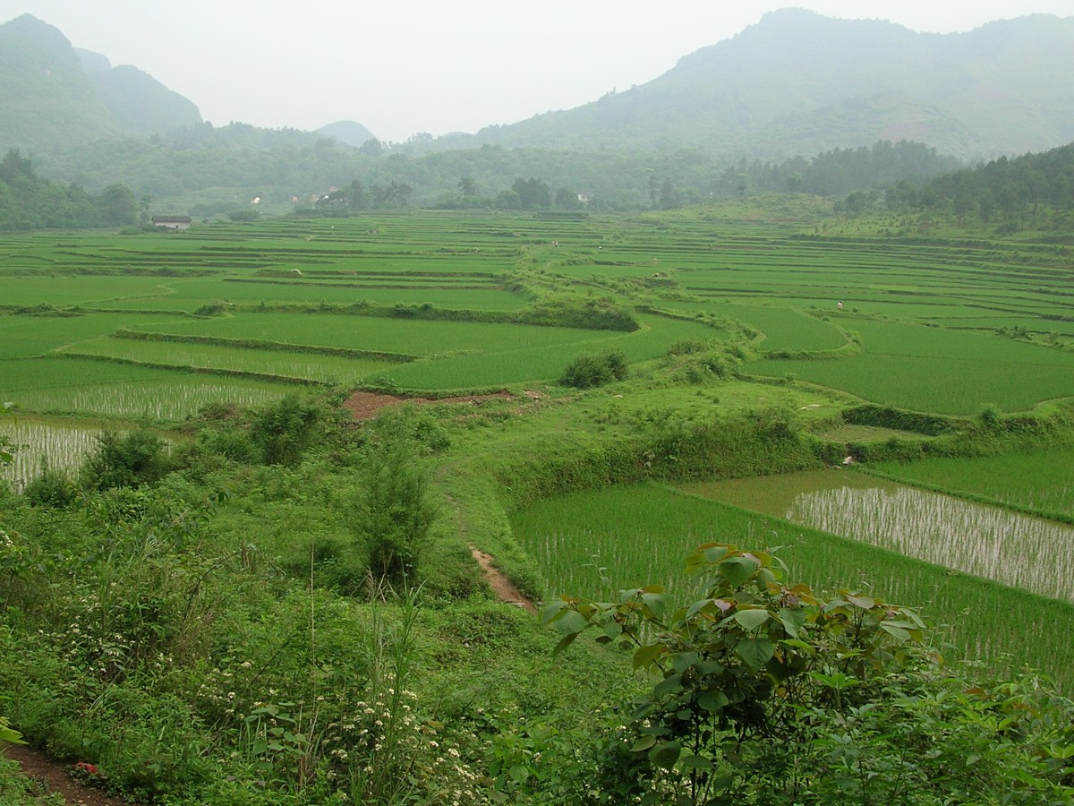 Rice fields, China, Backpacks and Bra Straps ch 2