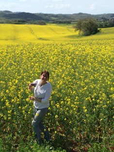 Near Carcassonne, French mustard fields