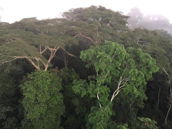 Tambopata National Reserve, Peru