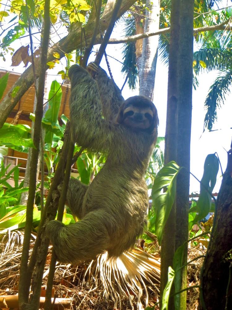 Sloth Eye contact