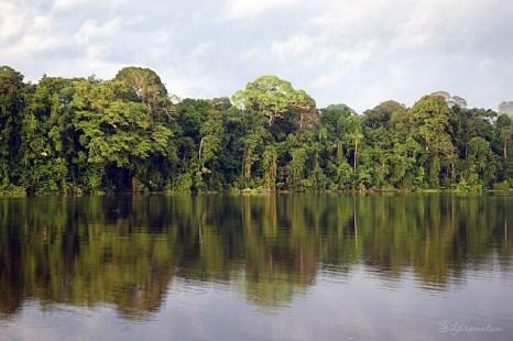 the gorgeous Amazon