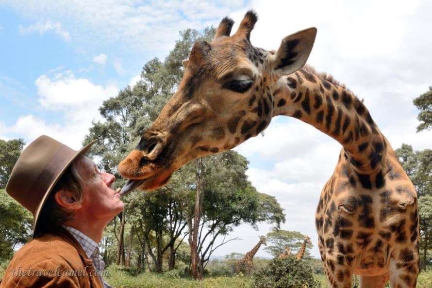 Giraffe Kiss in Kenya