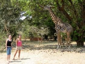 flatdogs campsite, giraffe