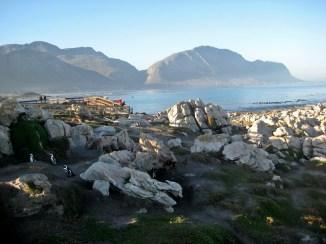 Stony Point penguin colony,