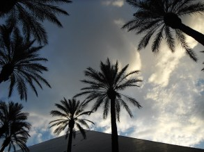 Palms and the luxor
