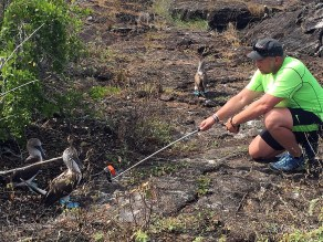 Galápagos Island blue footed booby