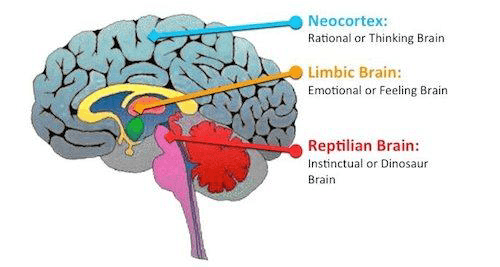 Part of the brain that controls sexuality