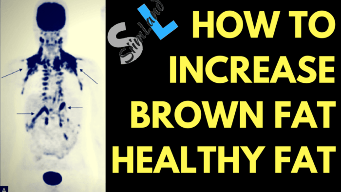 HOW TO INCREASE BROWN FAT the HEALTHY FAT Siim land