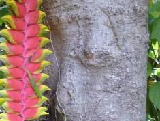 Geckos+flower+tree01