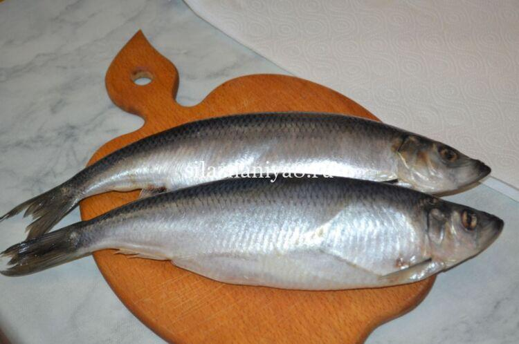 herring masin