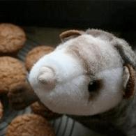 wieselmuffins