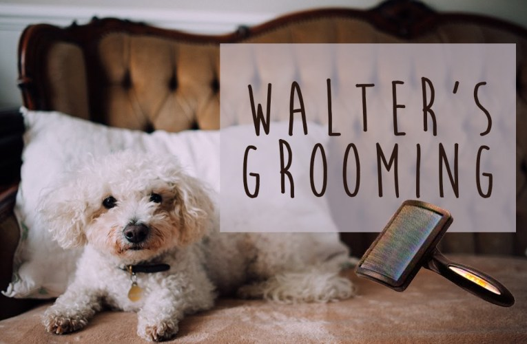 Dog Grooming, Lesbians and Tricks- oh my!