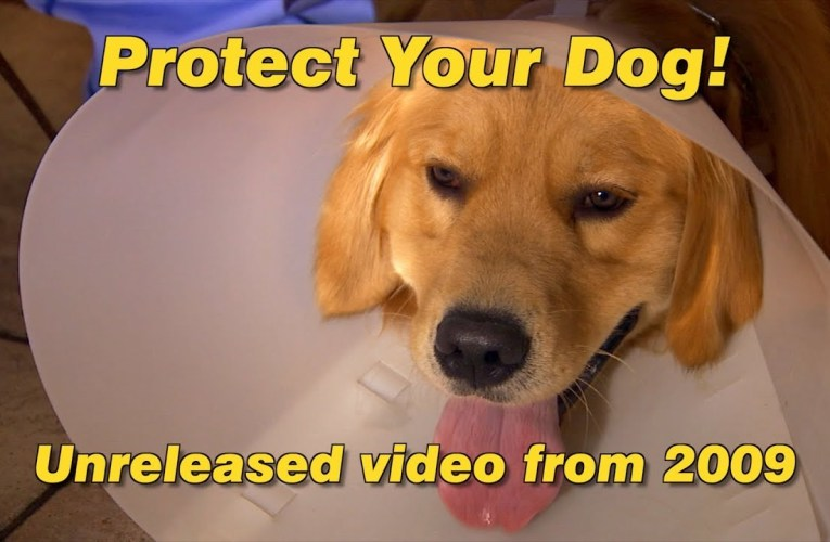 Protect Your Dog!