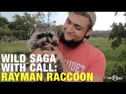 Animal Story: How Did Brandon Saved Rayman Raccoon's Life!?