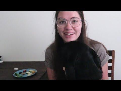feeding my service dog fruits and veggies