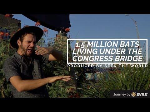 "1.5 Million Bats Living Under Congress Avenue Bridge "" Bat Conservation International!"""