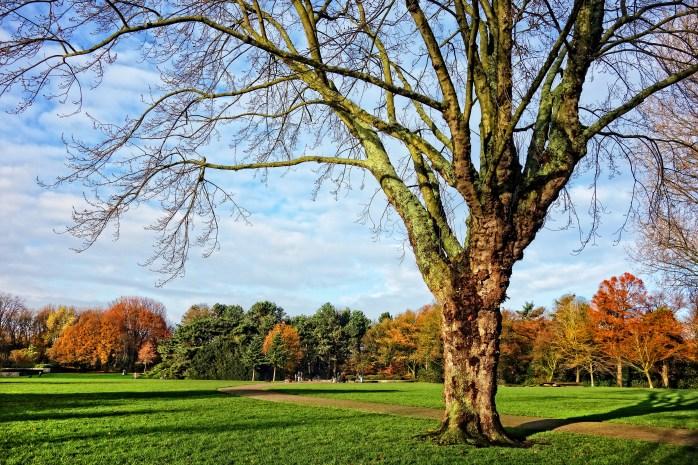 tree-2993560