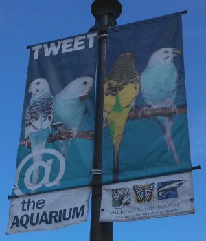 They Tweet, Get it?