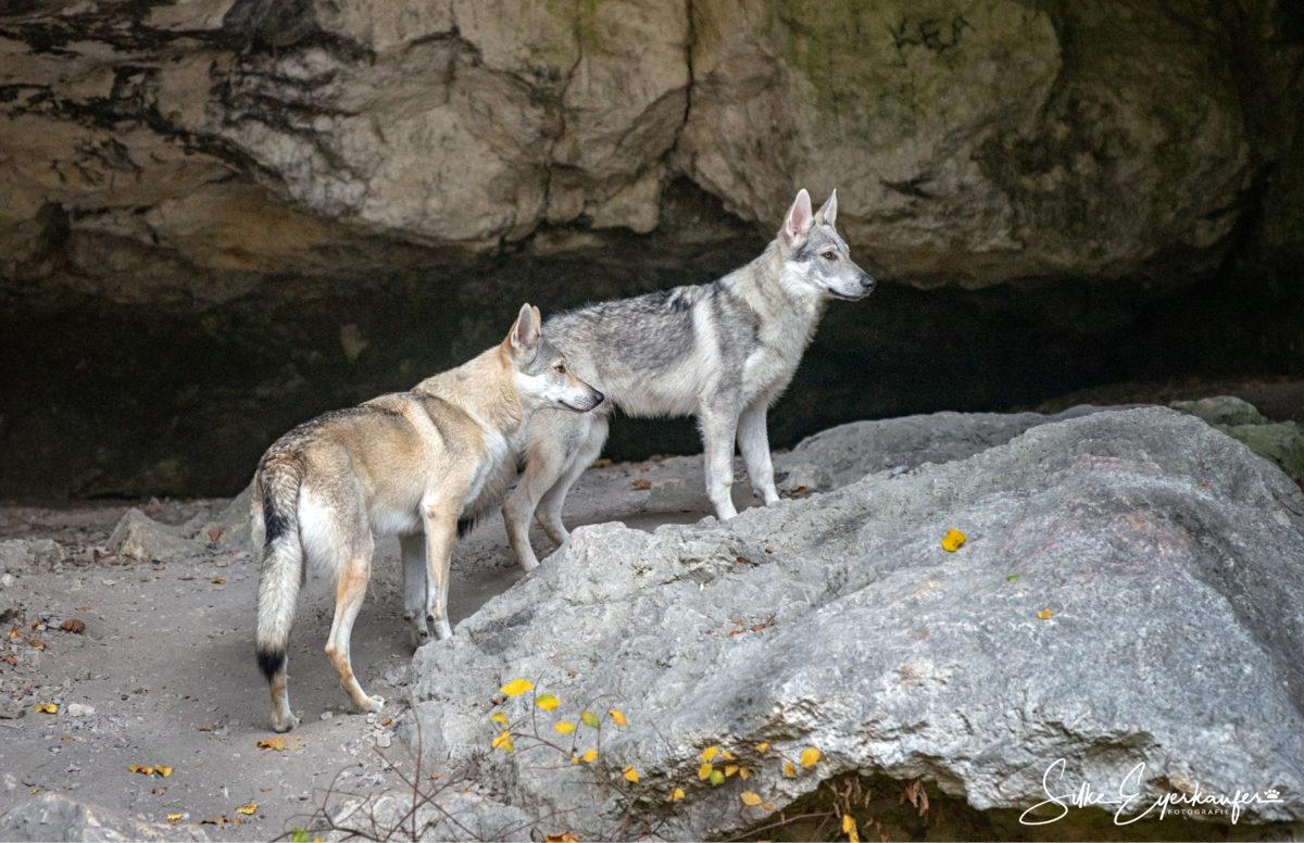 Höhlen- Wolfhunde ;)
