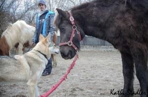 Freundschaft zwischen Pferd und zweitschechoslowakischen Wolfhunden :)