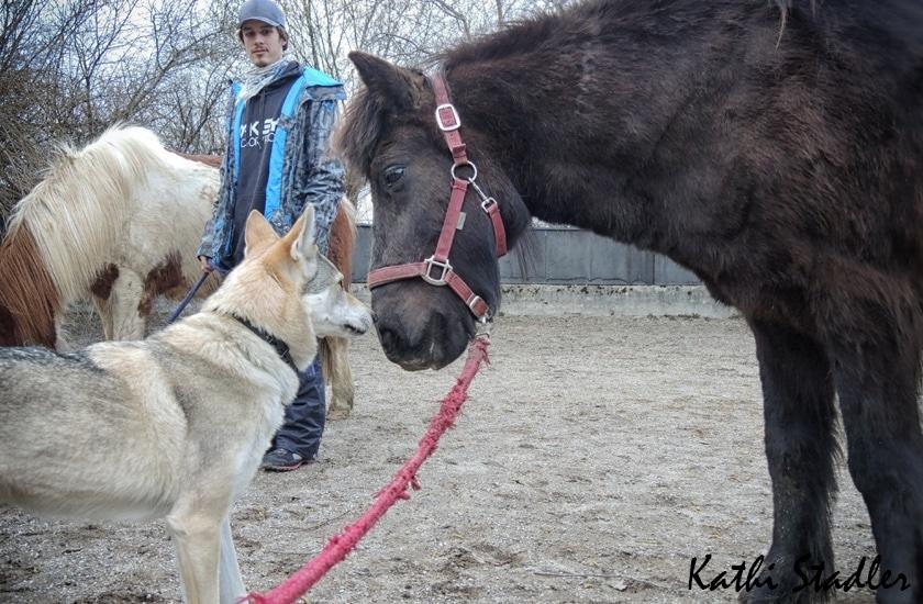 Freundschaft zwischen Pferd und Wolfhund :)