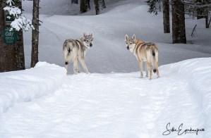 Wir warten auf den Winter – Impressionen eines wunderschönen Wintertages und einer Winterwanderung im Schneeloch Aschau :)