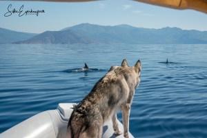 """Video: Abenteuer – Delfine                               Ein kleiner Zusammenschnitt unseres faszinierenden Abenteuers mit alten Bekannten in Griechenland – unseren """"großen Tümmlern"""" im Korinthischen Meer; 2019 :)"""