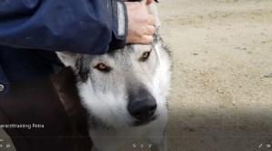 Video: Tierarzttraining für  Aracho – mit Tante Petra :)