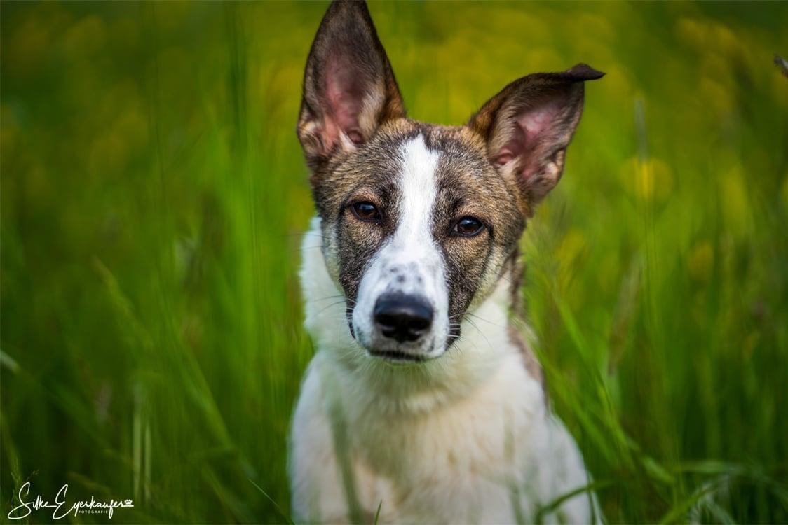 Dina – Hundewelpe aus dem bulgarischen Tierschutz