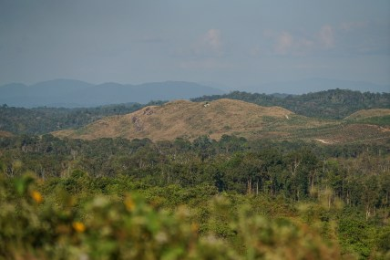 all the sacred forest will be gone soon - north east Cambodias beauty is fast to disappear