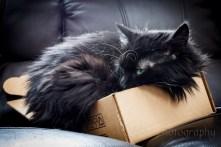 Lil Nanshe liked lil boxes