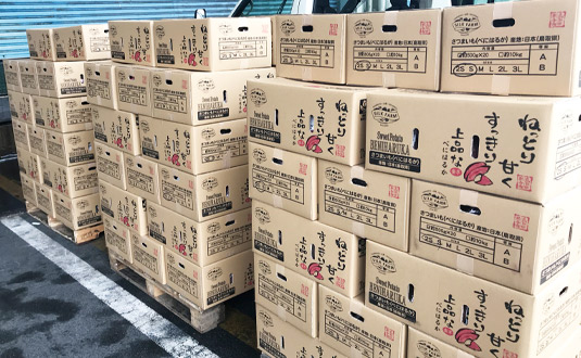 香港へ輸出前のサツマイモ