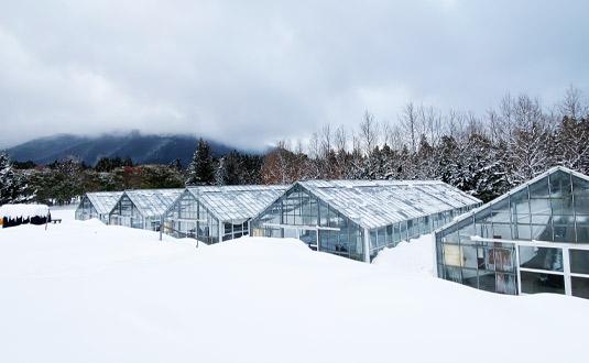 雪に埋もれた日南ハウス