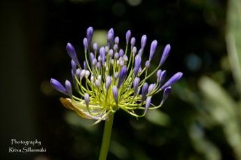 flowers (21 of 23)