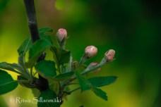 wild flower- Ritva Sillanmäki (82 of 144)
