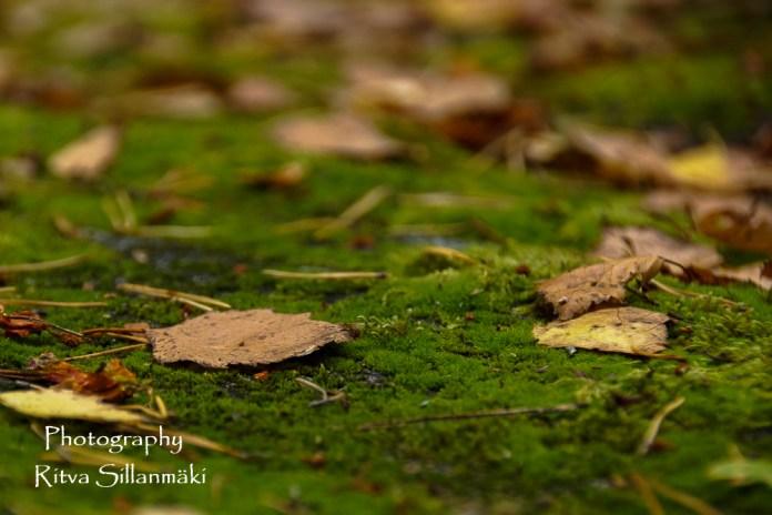autumn (10 of 32)