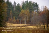 Country side autumn 2015 (46 of 179)
