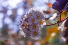 Summer flowers (9)